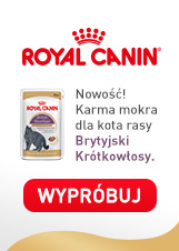 ROYAL CANIN British Shorthair karma mokra