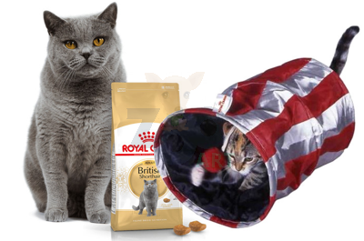 ROYAL CANIN British Shorthair 10kg + Tunel