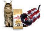 ROYAL CANIN Maine Coon Adult 31 10kg + Tunel