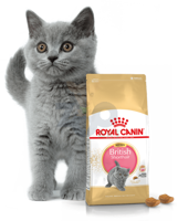 ROYAL CANIN Kitten British Shorthair 10kg + Torba zakupowa GRATIS!
