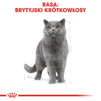ROYAL CANIN British Shorthair Adult 34 4kg