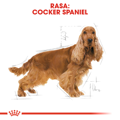 ROYAL CANIN Cocker Adult 3kg