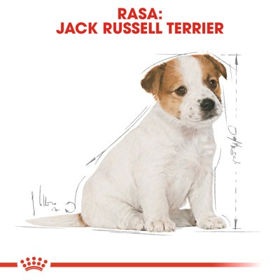 ROYAL CANIN Jack Russell Junior 3kg