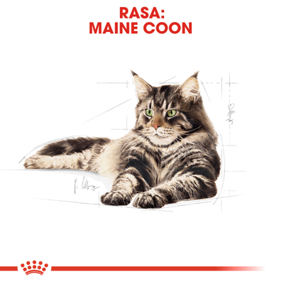 ROYAL CANIN Maine Coon Adult 31 400g