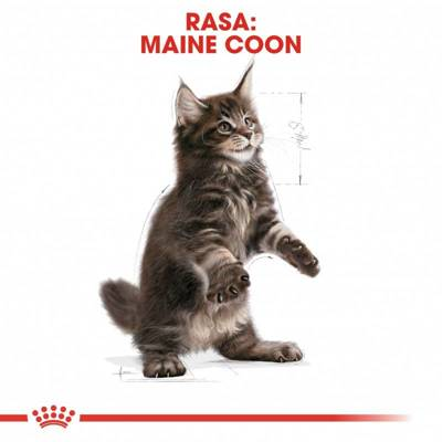 ROYAL CANIN Maine Coon Kitten 36 400g