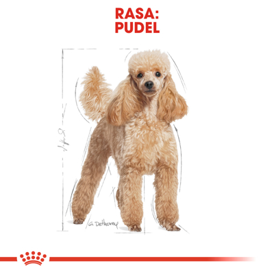 ROYAL CANIN Poodle Adult 1,5kg
