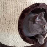 Co zrobić, żeby kot nie drapał kanapy? Kot testuje designerski drapak