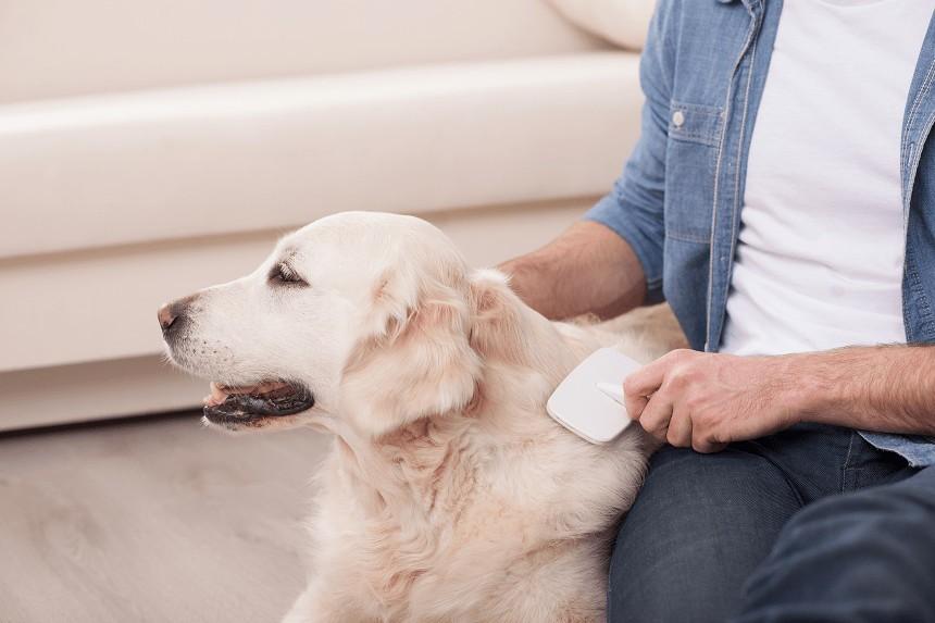 Wypadanie sierści u psa – kiedy należy się zaniepokoić?