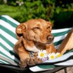 Pies na wakacjach – 3 pomysły na aktywny wypoczynek z czworonogiem