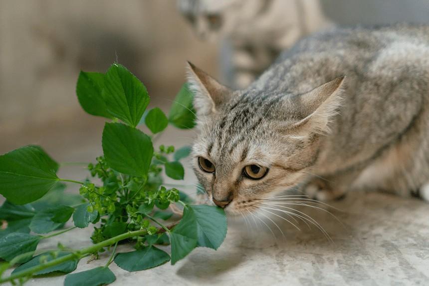 Jakiego Zapachu Nie Lubia Koty 5 Aromatow Ktore Odstraszaja Futrzaki Blog Zooart Com Pl