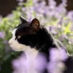 Co to jest kocimiętka? Jak działa na koty i gdzie ją kupić?