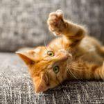 Jak wybierać drapaki dla kotów. 5 złotych zasad!