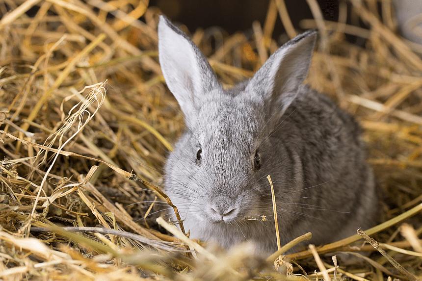 Królik miniaturka – żywienie małego gryzonia. O czym warto pamiętać?