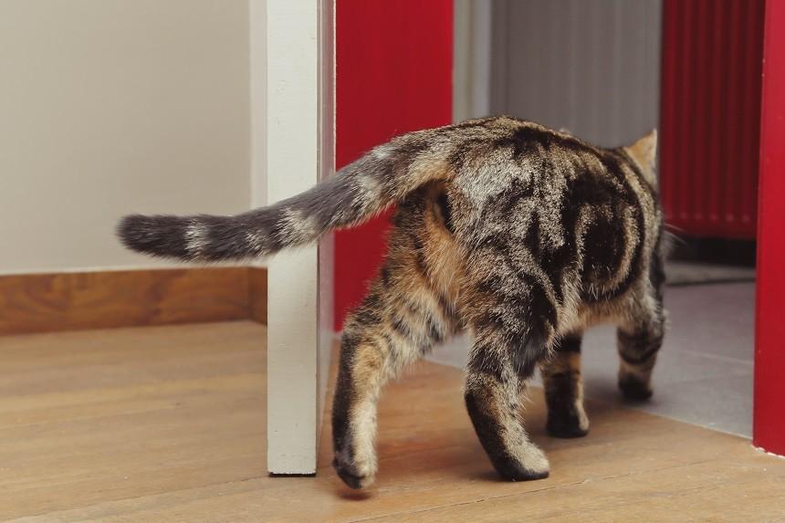 Wypuszczanie kota na dwór – jak zadbać o jego bezpieczeństwo?