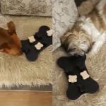 Mądre zabawy z psem w domu. Bucky i Leo testują grę strategiczną Trixie!