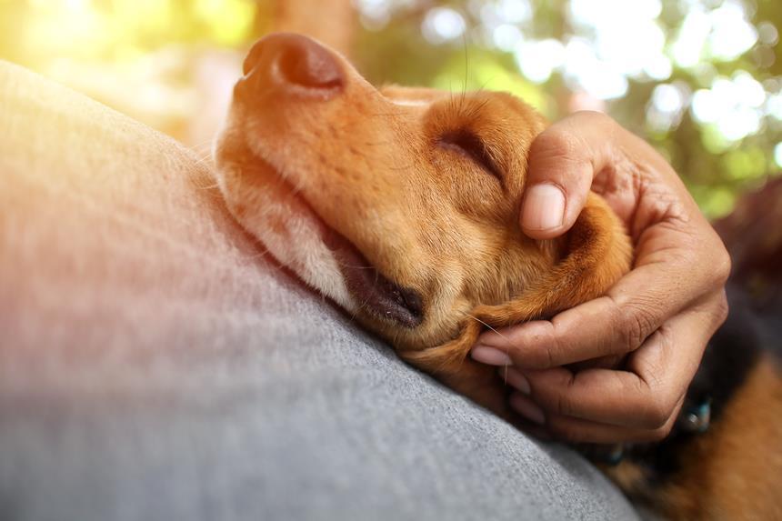 Giardia leczenie psa Pierwotniak giardia u psa