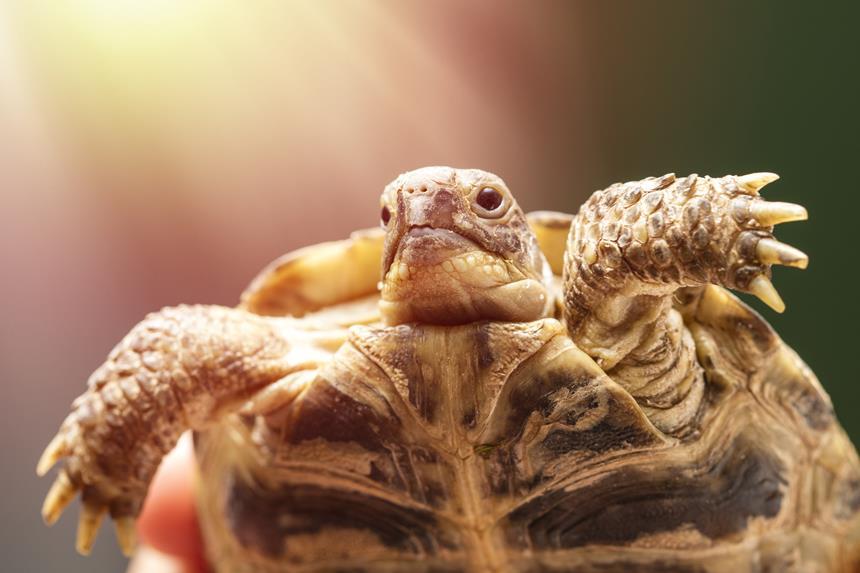 Na co może chorować żółw? Choroby żółwi od A do Z