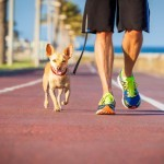 Bieganie z psem. 3 niezbędne rzeczy do biegania z psem