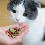 Co zrobić, gdy konieczna jest dieta dla kota?