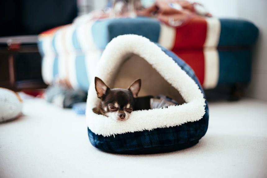 Jak nauczyć psa spać w legowisku, w budzie? Porady behawiorysty