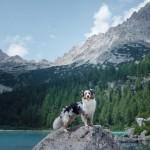 W góry z psem – o czym należy pamiętać?