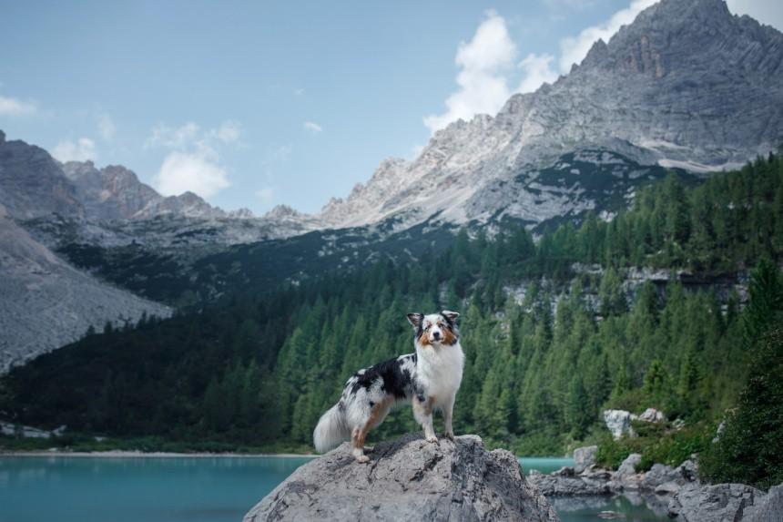 W góry z psem – o czym należy pamiętać