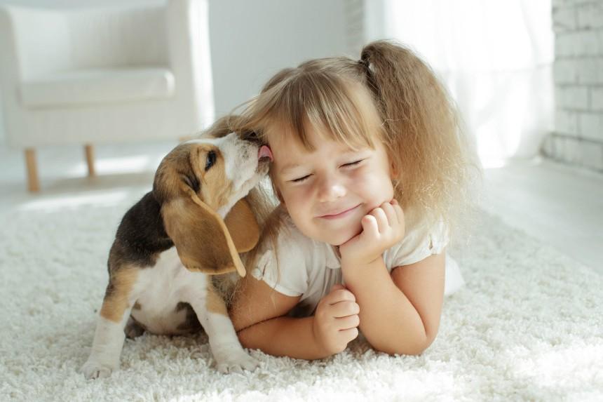 Wyprawka dla szczeniaka – pierwsze dni szczeniaka w domu. Co musi się w niej znaleźć?