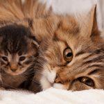 Karmienie małego kota – krok po kroku. Poznaj potrzeby swojego futrzaka!