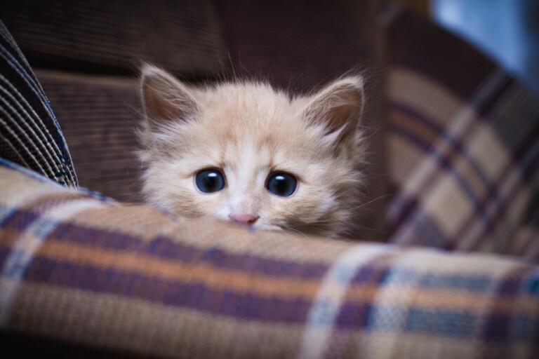 Strach przed kotami – czym jest ailurofobia i czy można ją leczyć?