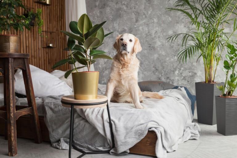 Rośliny trujące dla psa – czy masz je w swoim domu?