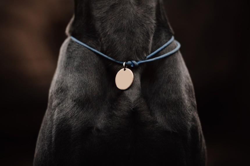 Zaginięcie psa – adresówka dla psa musi znaleźć się na obroży? Co jeszcze?