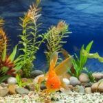 Aranżacja akwarium – to proste! Dobór wystroju krok po kroku