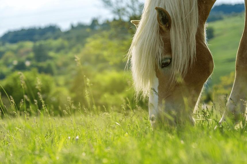 Co jedzą konie? Jaka pasza dla koni będzie najlepsza?