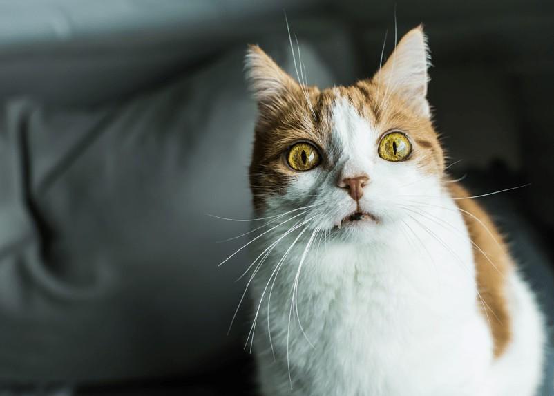 Czego nie lubią koty? Te 5 rzeczy je odstrasza!
