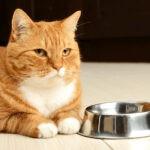 Czego nie może jeść kot? 5 produktów, które mogą mu zaszkodzić