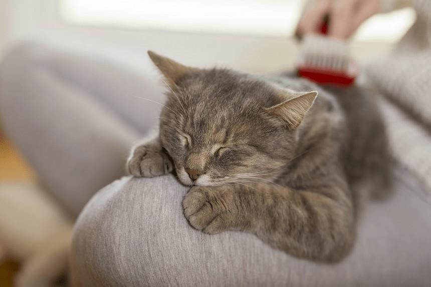 Czesanie kota od A do Z. Jak dbać o sierść kota?