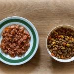 Czym karmić kota? Sucha karma kontra mokra – podpowiadamy!