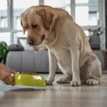 brak apetytu u psów