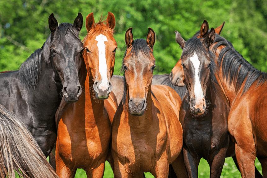Imiona dla koni i klaczy – zainspiruj się!
