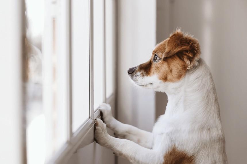 Jak Dlugo Pies Pamieta Wlasciciela Pies Teskni Nie Tylko Za Czlowiekiem Blog Zooart Com Pl