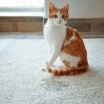Jak oduczyć kota sikania w domu? Poznaj przyczyny takiego zachowania