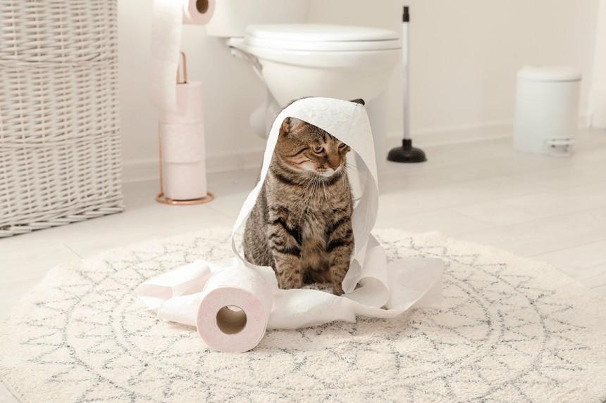 Jak pozbyć się zapachu kociego moczu? 3 skuteczne sposoby