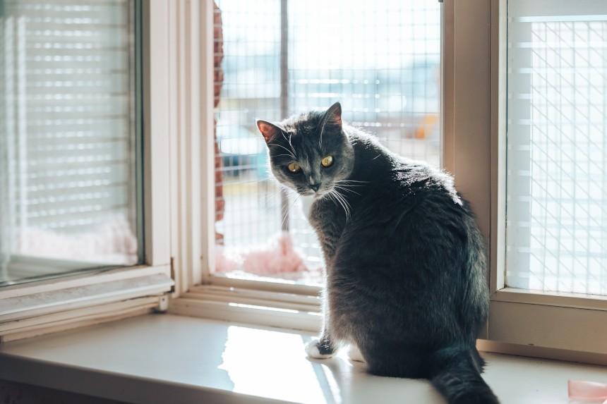 Jak zabezpieczyć okno przed kotem? Behawiorysta podpowiada!