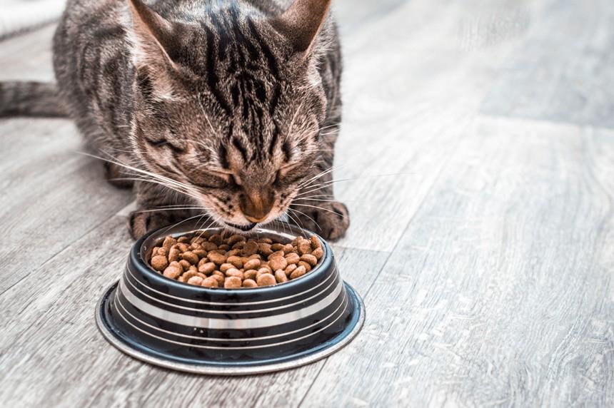 Karma bezzbożowa dla kota – czym kierować się przy wyborze?