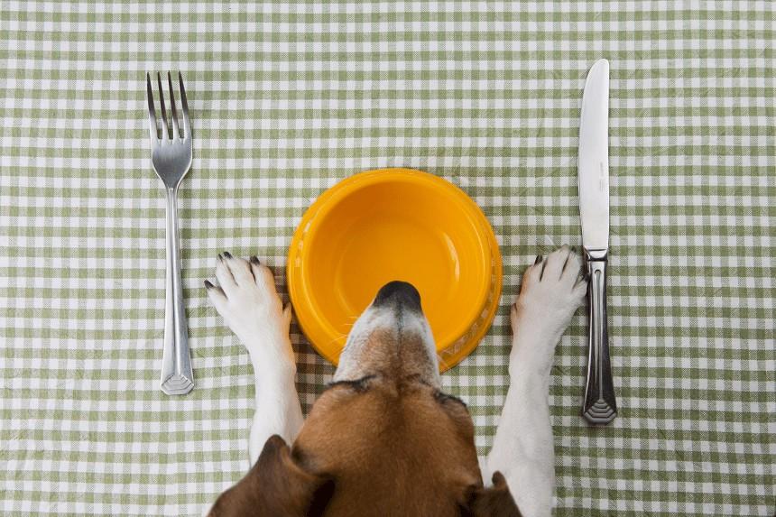 Sucha czy mokra karma dla psa – czyli co powinien jeść pies?