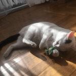 Kocimiętka dla kota – najlepsza zabawka? Humor testuje maskotkę Zolux z kocimiętką