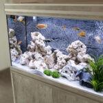 Mętna woda w akwarium – przyczyny i sposoby na jej oczyszczenie