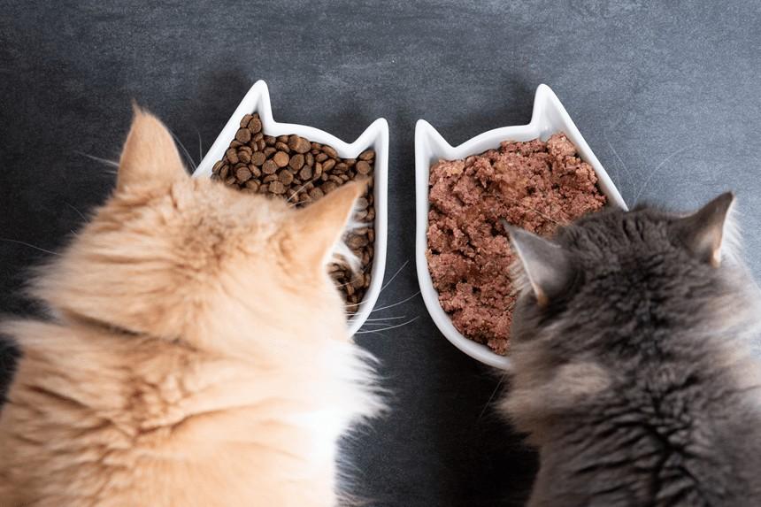 Mixed feeding, czyli łączenie karmy suchej i mokrej. To warto wiedzieć