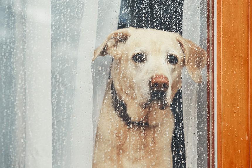 Pies boi się burzy. Dowiedz się, jak mu pomóc