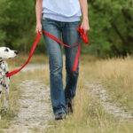 Pies na smyczy, czyli jak nauczyć psa chodzić na smyczy?